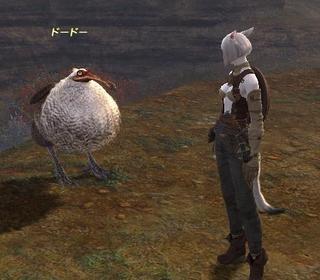 dodo-teki001.jpg